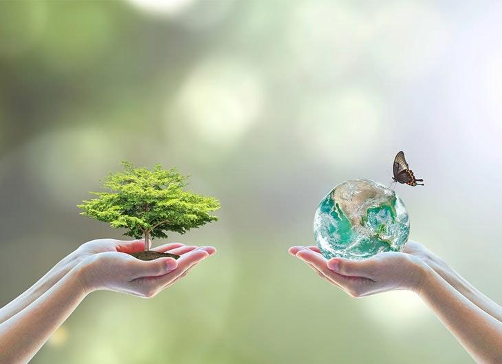 Como cuidar el medio ambiente consejos cotidianos